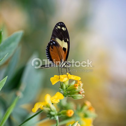Stunning butterfly insect on vibrant yellow flower
