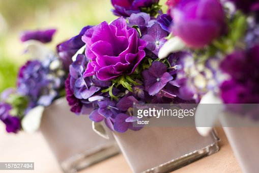 A stunning collection of purple flowers