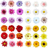 Colorful collage of flowers on isolated background