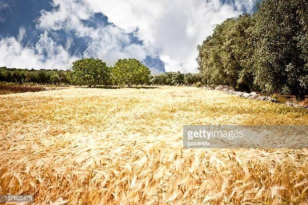 Stunning Salento Landscape