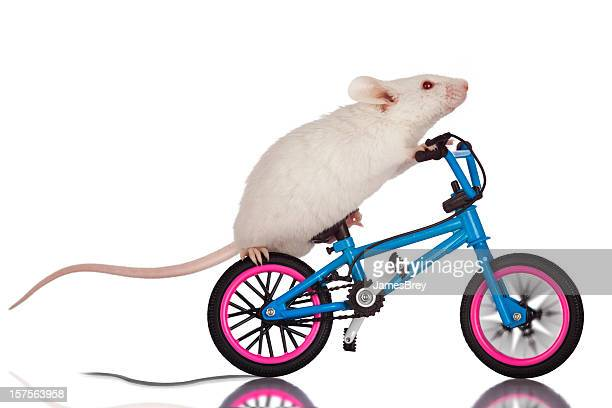 Stunt Mouse; Quick Breaking Bicycle Trick, Foot-Tire Skid, White Background