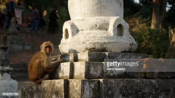 Stupa Swayambhu