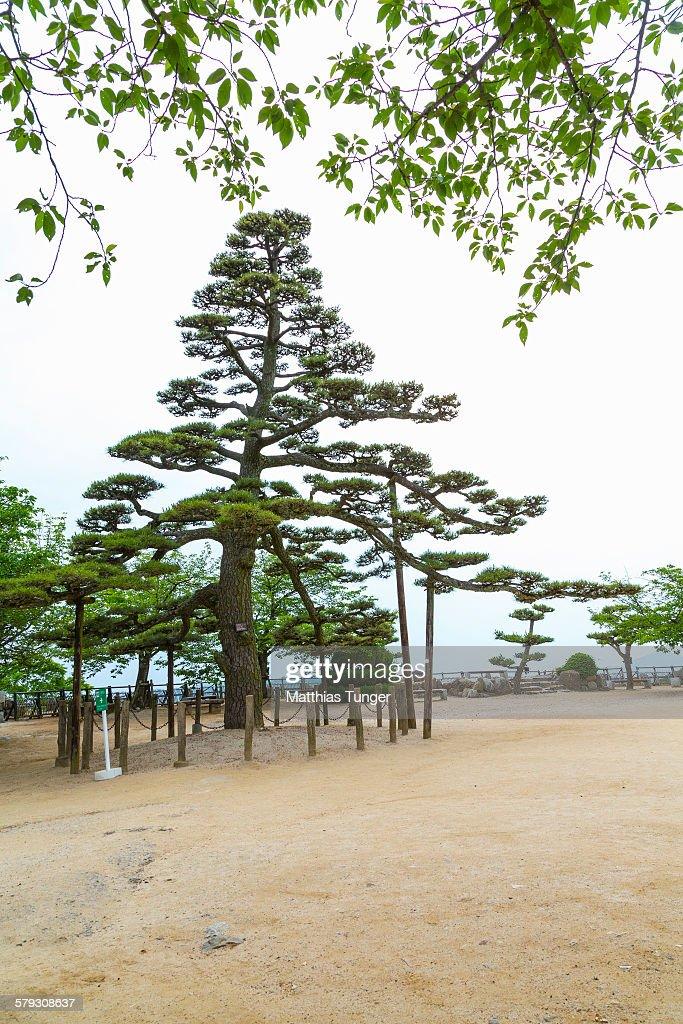 Styled tree in japan