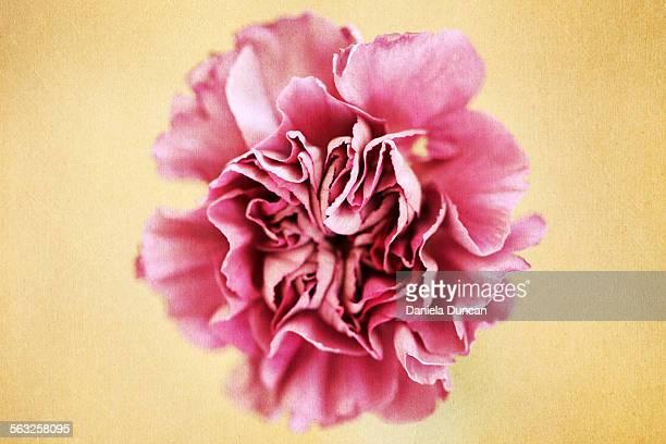 Stylized carnation