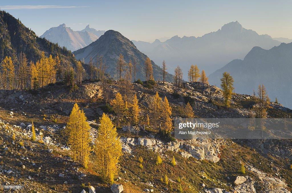 Subalpine Larch North Cascades Washington : Stock Photo