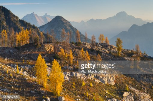 Subalpine Larch North Cascades Washington : Stock Photo