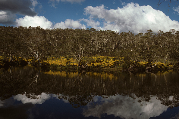 Upper Allyn Australia  city images : Barrington Tops National Park Stock Photos and Pictures | Getty Images