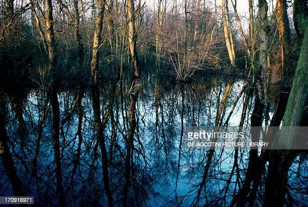 Submerged wood in Oasis of Punta Alberete Po Delta Regional Park EmiliaRomagna Italy