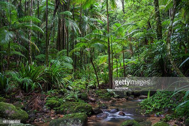 Subtropical rainforest along Bat Cave Creek Nightcap National Park New South Wales Australia