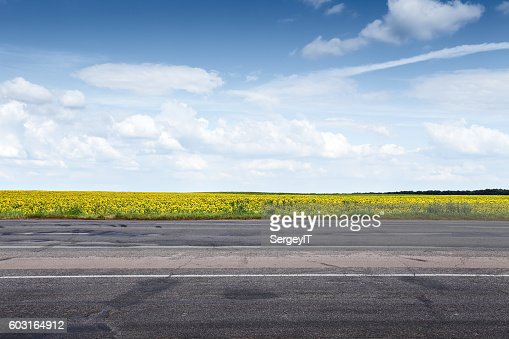 Suburb asphalt road and sun flowers : Stock Photo