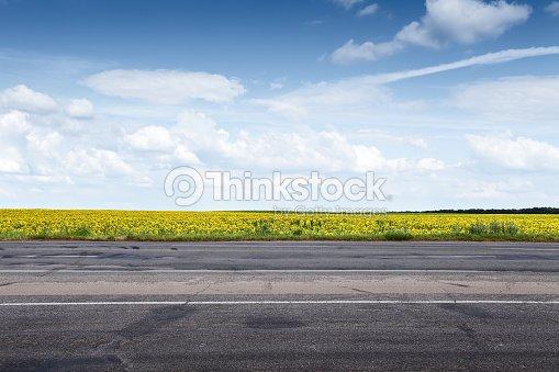 Suburb asphalt road and sun flowers : Stock Photo