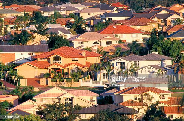 Suburban jungle of houses clothing the hills of a capital city instead of the retreating eucalypt forest Hard nonabsorbant roofs courtyards and...