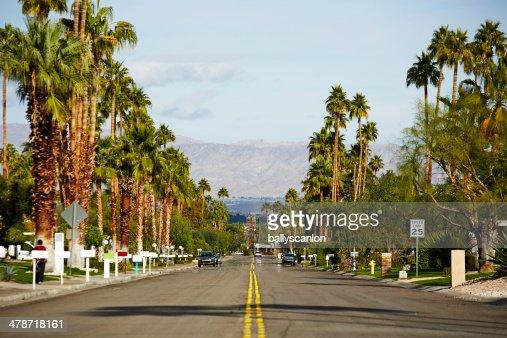 Suburban street with palm trees