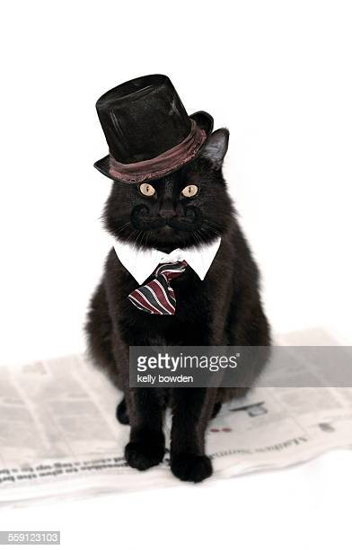 Successful business cat smartly dressed