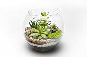 Succulent arrangement in a glass vase (terrarium)