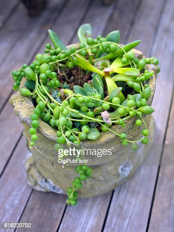 Succulent plant group planting : Stock Photo