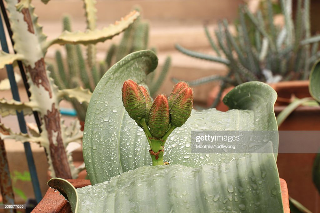 Succulent plants in garden : Stock Photo