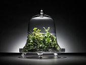 Succulent plants under glass dome