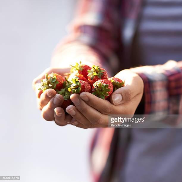 Succulent strawberries
