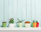 succulents collection in small flowerpots