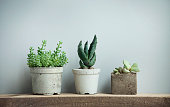 Close up of tiny succulents in diy concrete pots in scandinavian style home