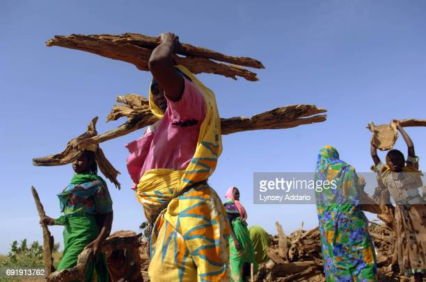 Sudanese refugees gather firewood being doled out by Africare in Gaga camp in Chad October 21 2006 Chad with its very limited supply of natural...