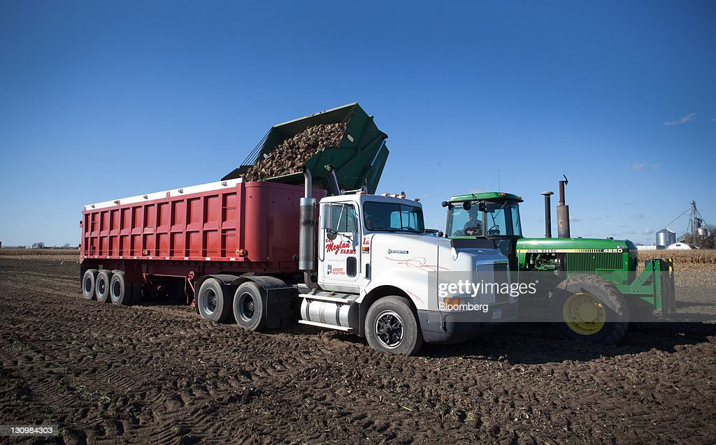 Sugar beets are dumped into a truck after being harvested in Bay City, Michigan, U.S., on Monday, Oct. 24, 2011. U.S. sugar supplies this year will fall to the lowest since record-keeping began in 1960 as consumption rises and a smaller beet crop limits supplies left from last season, according to a U.S. Department of Agriculture report released earlier this month. Photographer: Adam Bird/Bloomberg via Getty Images