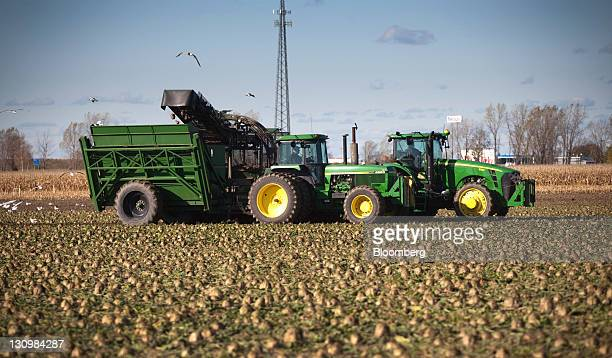 Sugar beets are harvested in Bay City Michigan US on Monday Oct 24 2011 US sugar supplies this year will fall to the lowest since recordkeeping began...