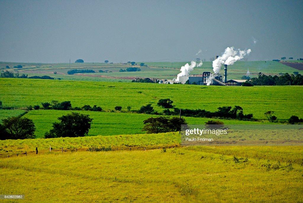 Sugar Cane fields at Cerradinho Ethanol and Sugar Mill in Cantaduva | Location Cantaduva Brazil