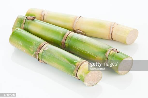 Sugar Cane.
