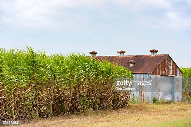 Sugar cane plantation and old barn shack along the Mississippi in Louisiana USA