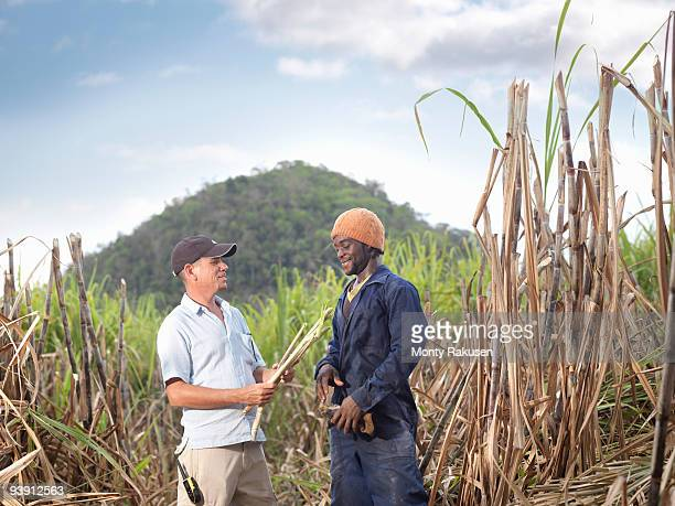 Sugar Cane Workers Discussing Crop