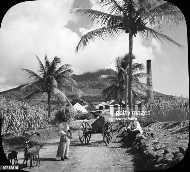 Sugar estate on the island if Nevis British West Indies near the boyhood home of Alexander Hamilton