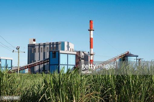 Sugar mill and sugarcane field