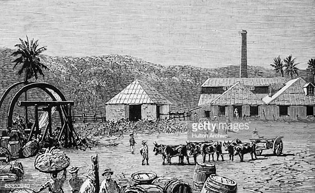 Sugar mills on a sugar cane plantation at St Thomas Jamaica 1884 Original publication The Graphic pub 22nd November 1884
