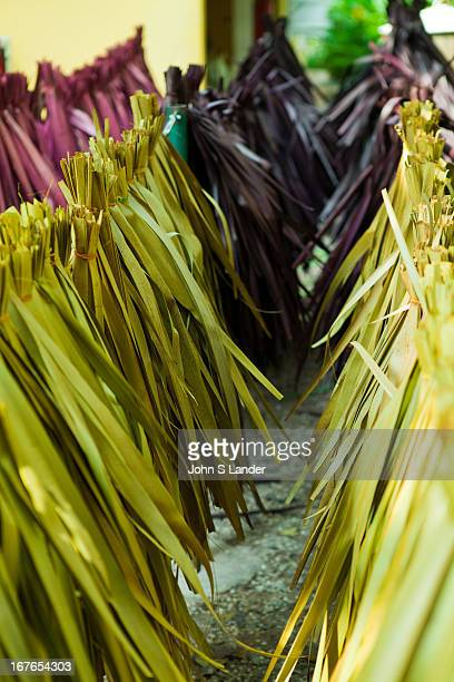 Sugar palm tree leaves an abundant natural and recyclable resource is often used for making thatch and weaving materials thanks to its abundance and...
