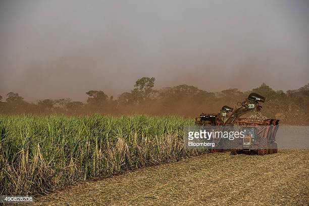 Sugarcane is harvested at a farm near Biosev SAs Santa Elisa sugar mill in Sertaozinho Brazil on Thursday Sept 24 2015 As rainfall disrupts the...