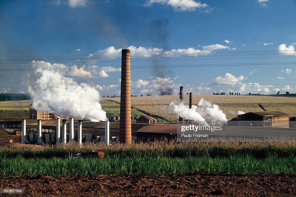 Sugarcane Refinery in Sertao