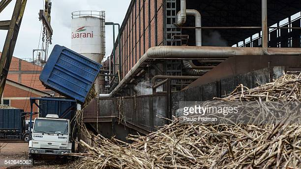 Sugarcane stalks are unloaded to be crushed at the Unidade industrial Cruz Alta da Guarani SA ethanol sugar and energy on Tuesday October 8th 2013