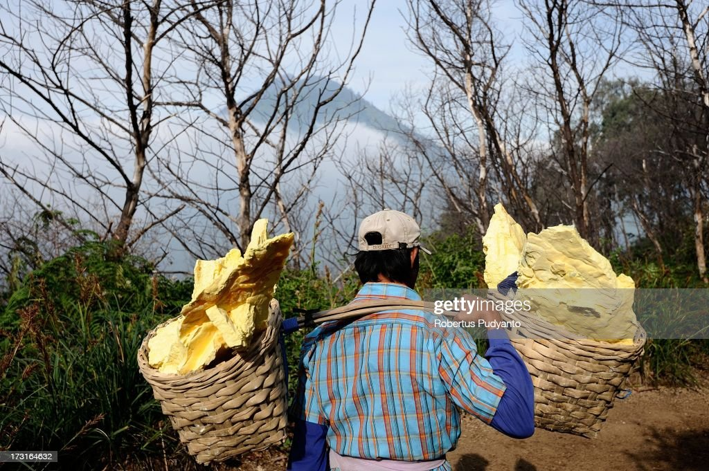 A sulfur miner carries two baskets of sulfur on July 9, 2013 in Arjuna, Java, Indonesia. Ijen Crater, which is known as Kawah Ijen, is located in the Ijen Volcano region, bordered by Banyuwangi and Bondowoso in East Java Province, Indonesia. Ijen Volcano is 2,600 meters tall (8,660 ft), topped with a large caldera and a 200 meter deep lake of sulfuric acid. The quietly active volcano emits gases through fumaroles inside the crater, and local miners have tapped those gases to earn a living. Stone and ceramic pipes cap the fumaroles, and inside the sulfur condenses into a molten red liquid, dripping back down and solidifying into pure sulfur. Miners hack chunks off with steel bars, braving extremely dangerous gases and liquids with minimal protection, then load up as much as they can carry for the more than 3 kilometers to the weighing station. Loads can weigh from 50 to 90 kg (100 - 200 lbs), and a single miner might make as many as two or three trips return in a day. At the end of a long day, miners take home approximately Rp. 50,000. The sulfur is then used for vulcanizing rubber, bleaching sugar and other industrial processes nearby. Sulfur widely used in fertilizer industry, cosmetics, skin disease drug, insecticides, paper, paints, plastics, petroleum processing, rubber and tire industry, sugar industry, batteries, chemicals industrial, explosives, weaving, film and photography, and also in metal or steel industry.