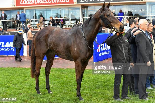 Sullivan Bay after winning the Legacy 2017 Badge Appeal Handicap at Caulfield Racecourse on August 19 2017 in Caulfield Australia