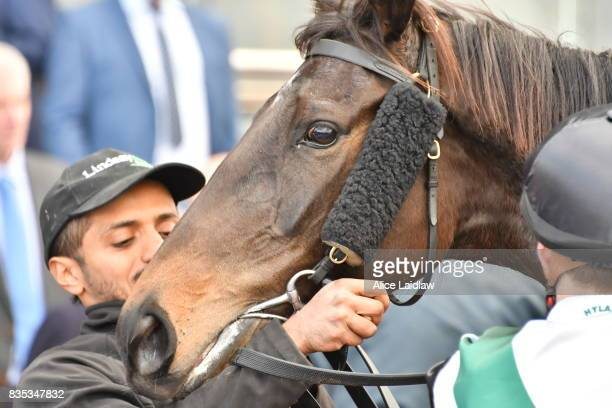 Sullivan Bay ridden by Cory Parish wins the Legacy 2017 Badge Appeal Handicap at Caulfield Racecourse on August 19 2017 in Caulfield Australia