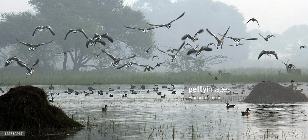 Sultanpur national park as thick smog engulfed the Delhi, NCR region on November 7, 2012 in Gurgaon, India.