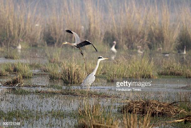 Sultanpur National Park has already over 200 bird species despite the late onset of winter and more birds are expected to fly in as temperature drops...