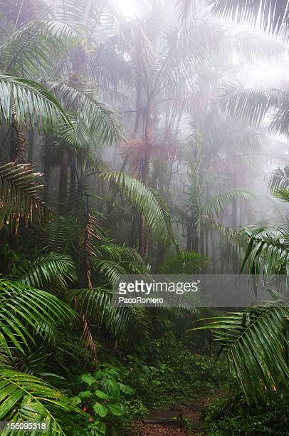 A sultry wet El Yunque Rain Forest in Puerto Rico