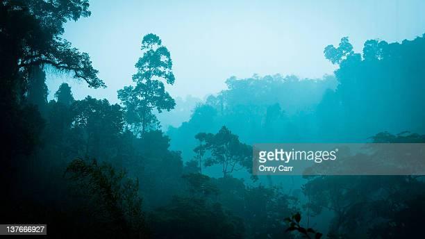 Sumatra jungle through rain