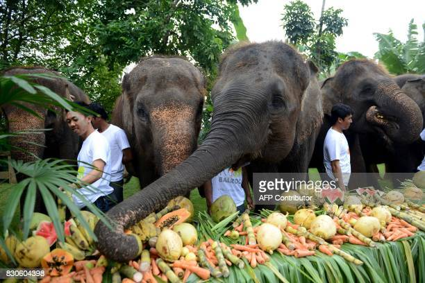 Sumatran elephants eat during a celebration for World Elephant Day at the Bali Zoo in Gianyar regency on Bali island on August 12 2017 / AFP PHOTO /...