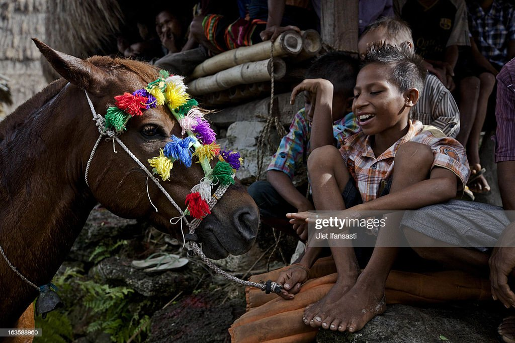 A Sumbanese kid playing with horse after being decorated for the pasola during the pasola war festival at Wainyapu village on March 7, 2013 in Sumba Island, East Nusa Tenggara, Indonesia. Sandalwood pony horses are native to the island of Sumba in Indonesia. For the people of Sumba, the Sandelwood horse has an important role in all aspects of their daily life, including transportation and culture. On the island of Sumba the ancient tradition of Pasola still draws large crowds and tourists. Pasola involves two teams of men on horseback charging towards each other.
