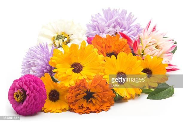 Summer August flowers