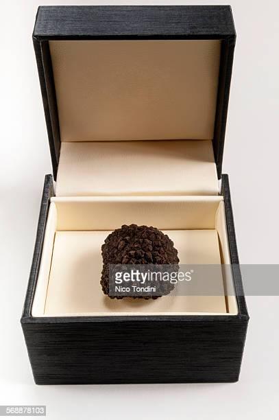 Summer black truffle